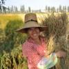 Apple iPhone SE ориентирован на фермеров Китая