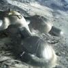 Ученые хотят построить на Луне целую деревню из местной пыли