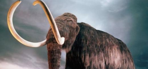 Существуют две основные версии вымирания мамонтов: деятельность человека и изменение климата. Теперь ученые считают, что одна из них окончательно подтверждена.