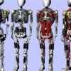 Японцы представили искусственный скелет с робомускулами