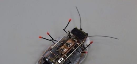 В Калининграде создали таракана-разведчика