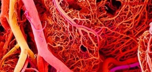 Китайская биотехнологическая компания Sichuan Revotek Co объявила о создании первого в мире 3D-биопринтера, позволяющего печатать кровеносные сосуды для создания персонализированных человеческих органов.