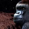 Роскосмос отправит обезьян на Марс