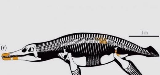 В России на берегу Волги нашли новый вид плиозавра. Животное жило в начале мелового периода, достигало 5 метров в длину и охотилось за крупными жертвами.