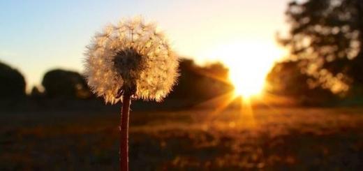 50 цитат, которые помогут по-иному посмотреть на мир