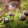 Эксперимент с муравьями показал, что без интеллектуальной элиты общество жить не может.