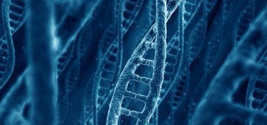 Исследование: удаление генов может увеличить продолжительность жизни на 60 процентов