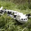 Робот-саламандра двигается, как настоящая амфибия