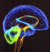 Учёные обнаружили способность мозга бессознательно решать математические задачи