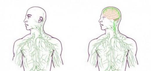 Обнаружена скрытая связь между мозгом и иммунной системой