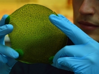 Искусственный лист будет генерировать кислород на Земле и других планетах