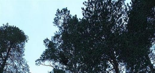 Отель на деревьях находится на самом севере Швеции, недалеко от небольшой деревни Харадс, рядом с полярным кругом. Авторы проекта – Tham и Videgård Arkitekter.