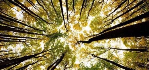 Механические деревья будут собирать энергию, колыхаясь на ветру