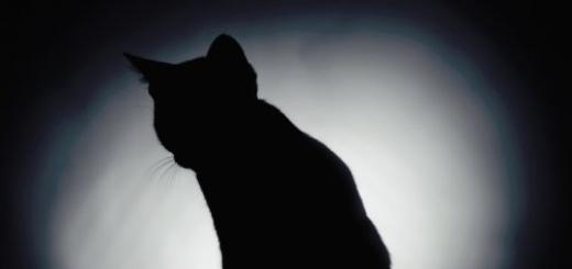 Ученые создали крупный вариант кошки Шредингера