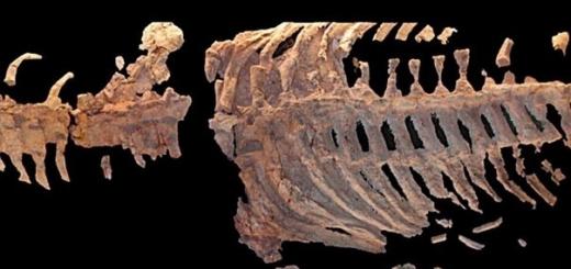 Исследователи из РФ зарегистрировали новый вид плезиозавра. В отличие от своих собратьев существо имело не четыре пальца, а пять. Жило оно примерно 65 млн лет назад.