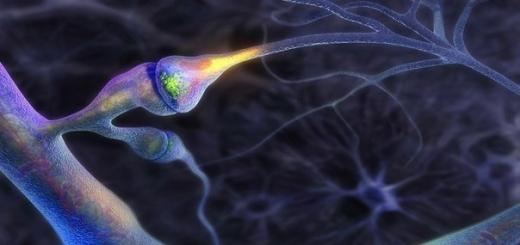 Искусственный мозг может стать реальностью в ближайшие 50 лет
