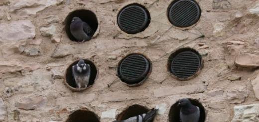 Новый парадокс квантовой механики — три голубя в двух голубятнях