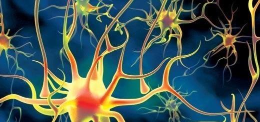 Как восстанавливаются нервные клетки?