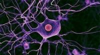 В МГУ создали безопасные наночастицы для лечения рака