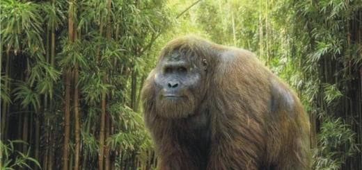 Сравнительно недавно (каких-то 300 тысяч лет назад) на Земле жили гигантские человекоподобные обезьяны гигантопитеки. По некоторым расчетам, их масса достигала 300 килограммов, а рост — 3 метров. Теперь вот разобрались, почему эти гиганты вымерли.
