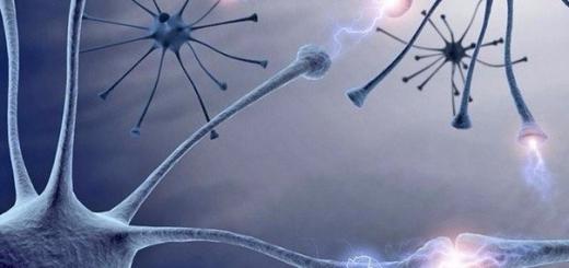 В мозге человека помещается около петабайта информации