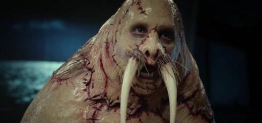 Эволюция превратит человека в тюленя, – исследователь