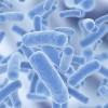 Ученые выяснили, что бактерии способны превращать воду в лед