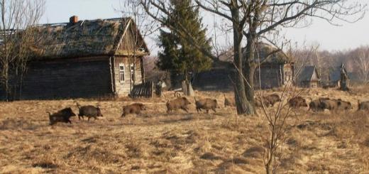 Чернобыль превратят в заповедник дикой природы