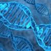 В генах человека заложена регенерация конечностей